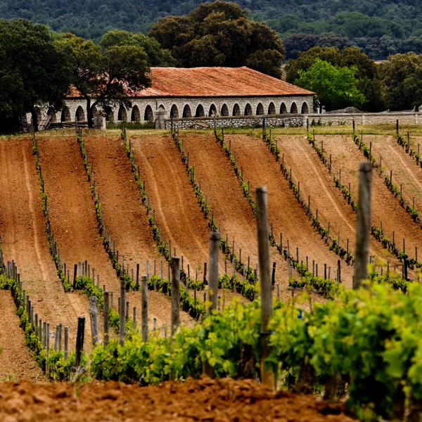 Bodegas PradoRey Ruta del Vino Ribera del Duero