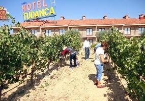Hotel Tudanca Aranda: Vendimia