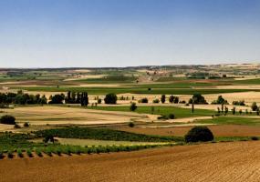 PradoRey Ribera del Duero