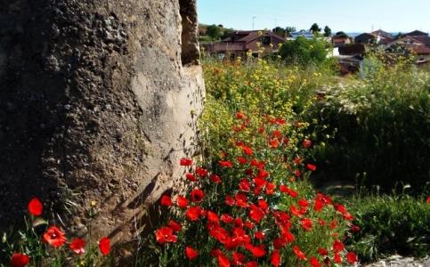 Castrillo de la Vega: Cuesta de las bodegas