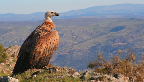 Foto propiedad de la Fundación Patrimonio Natural de Castilla y León